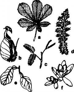 Different type leaf inticlificalions