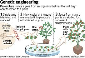 Plants Genetic Engineering