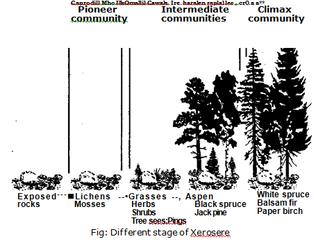 Stages of Xerosere