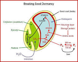seed democracy