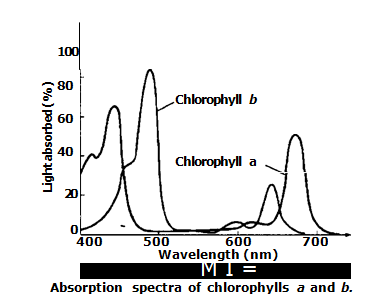 Action spectrum vs Absorption spectrum | Biology Boom