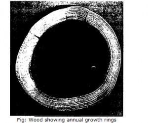 Wood showing annual growth rings