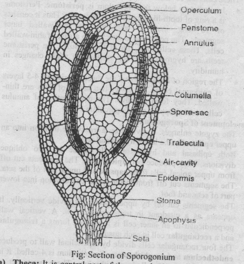 type funaira occurrence   structure  u0026 sexual reproduction